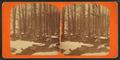 Maple sugar orchard, by Webster, J. N. (Joseph N.), 1838-1920.png