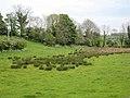 Marshy field near Ballygoskin - geograph.org.uk - 437657.jpg