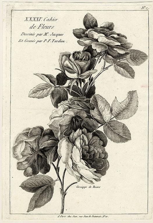 Filemaurice Jacques Grouppe De Roses Ubs G 0896 Iijpg