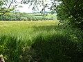Meadow at Fresh Moor - geograph.org.uk - 1606726.jpg