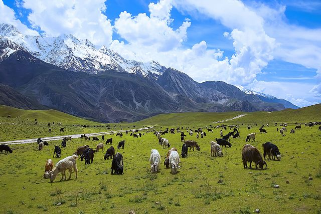 Meadows of Chitral Gol National Park in Pakistan.