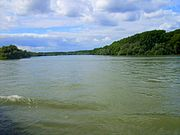 Meander, river Rhine near Speyer Germany.JPG