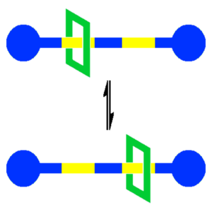 Molecular shuttle - An example of a molecular shuttle where the macrocyle (green) moves between two stations (yellow).