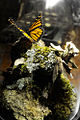 Monarch Butterfly Taxidermy 10.jpg