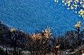 Morning Light (34012395706).jpg