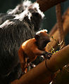 Mother and Baby Monkey (4236574928).jpg