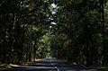 Mothugudem road near Chintoor.jpg