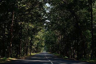 Ecosystem services - Social Forestry in Andhra Pradesh, India, providing fuel, soil protection, shade and even well-being to travellers.