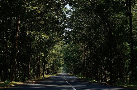 Social forestry in Andhra Pradesh, India, providing fuel, soil protection, shade and even well-being to travellers. Mothugudem road near Chintoor.jpg