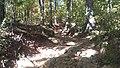 Mount Yonah Trail, ankles beware - panoramio.jpg