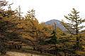 Mt.Hirugatake 21.jpg