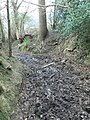 Muddly bridleway - geograph.org.uk - 693955.jpg