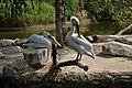 Muenster-100720-15823-Zoo.jpg