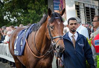 Mukhadram British-bred Thoroughbred racehorse