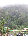 Munnar - views from Munnar (40).jpg