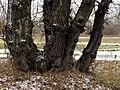Muromets Park Kyiv 11.jpg