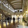 Museo de Historia Natural Hall Central 2.jpg