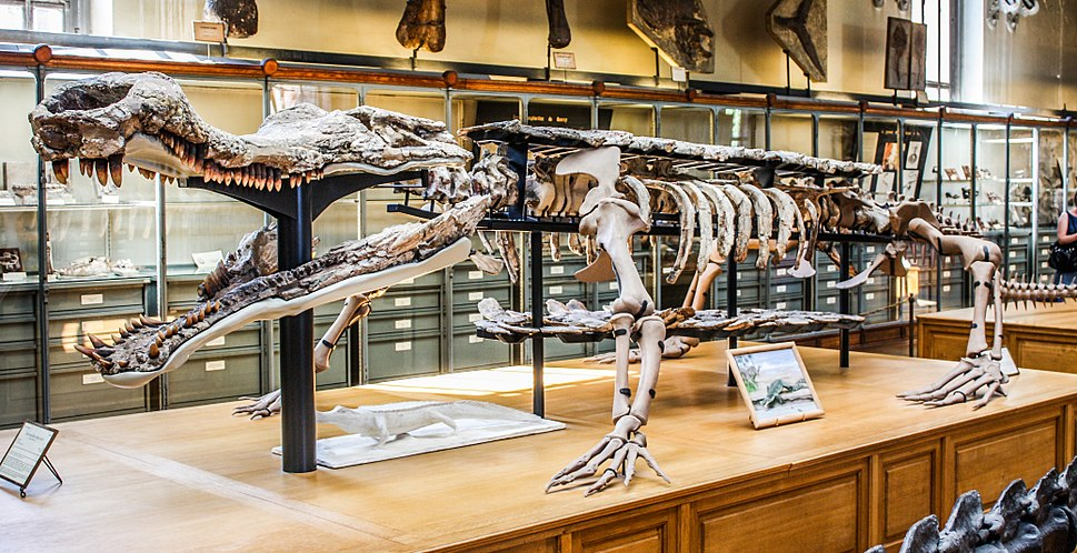 Museum of Natural History Sarcosuchus