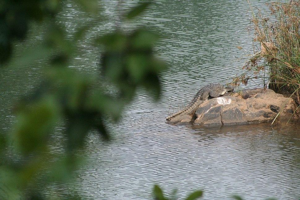 Muta crocodile park