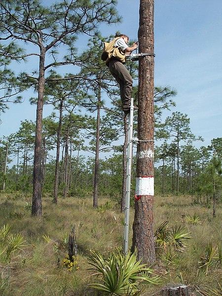 File:My Public Lands Roadtrip- Baby Bird Banding in the Lathrop Bayou in Florida (18439679261).jpg