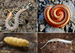 Myriapods - Photo (c) Animalparty, some rights reserved (CC BY-SA)