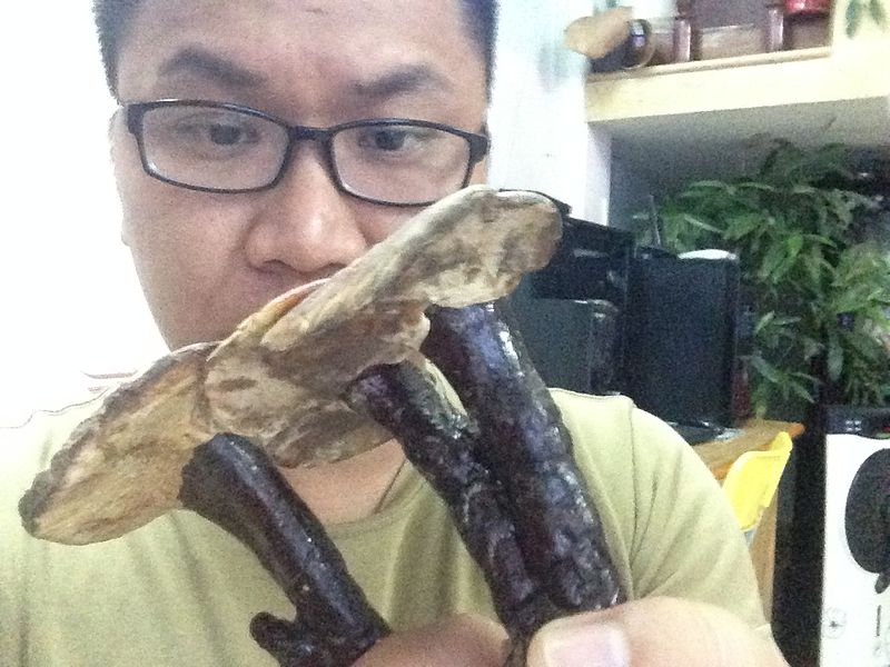 File:NẤM LINH CHI LIM XANH.jpg