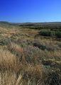 NRCSMT01040 - Montana (4929)(NRCS Photo Gallery).tif