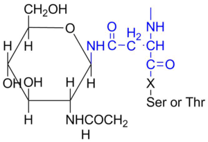 Oligosaccharide - An example of N-linked oligosaccharide, shown here with GlcNAc. X is any amino acid except proline.