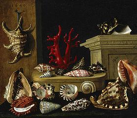 Nature morte aux coquillages et au corail