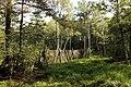 Nature reserve Rájecká rašeliniště in summer 2014 (12).JPG