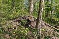 Naturschutzgebiet Königsdorfer Forst-7317.jpg