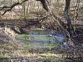 Naturschutzgebiet Riedwiese (3).jpg