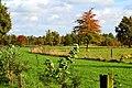 Nederlands landschap (11465047005).jpg