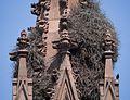 Nest in the Green-Wood Cemetery gate (61800).jpg