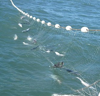 Sustainable yield - Fishery management utilizes the concept of sustainable yield to determine how much fish can be removed, so that the population remains sustainable.