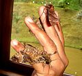 Noctuidae and Sphingidae sp. Moths - Flickr - gailhampshire.jpg