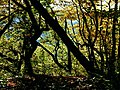 Not All Trees Make It Until Next Autumn - panoramio.jpg