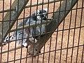 Oaklawn Farm Zoo, May 16 2009 (3538884995).jpg