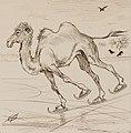 Oberländer Adolf - Das Kamel.jpg