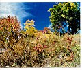 October Autumn Colors Switzerland - Natural Color ^ ars artis Photography 1988 - panoramio (1).jpg