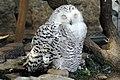 Oji zoo, Kobe, Japan (1505353150).jpg