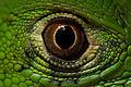 Ojo de Iguana.jpg