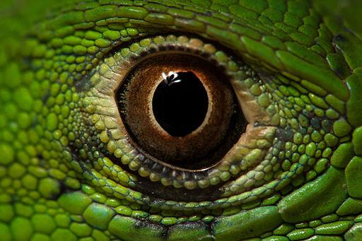 Ojo de Iguana