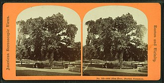 Great Elm (Boston) - Stereoscopic view of Great Elm, 19th century