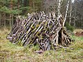 Old pile of firewood - geograph.org.uk - 291921.jpg