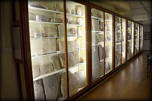 Petrie Museum of Egyptian Archaeology - Fragments and slabs of stelae