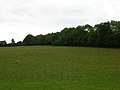 One Cow, Many Crows - geograph.org.uk - 225629.jpg