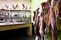 Open Atelier - taxidermie - Natuurmuseum Fryslân.jpg