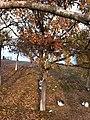 Oran, 06450 Çankaya-Ankara, Turkey - panoramio (5).jpg