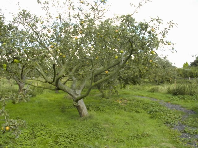 Orchard3